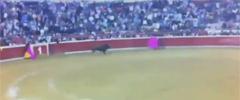 Бикът