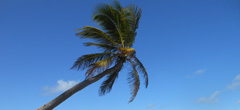 Плаж с палмово дърво