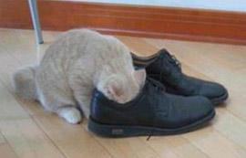 Стъпалата - грижа и съвети! Cat
