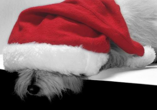 Куче с коледна шапка