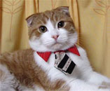 Бизнес котка