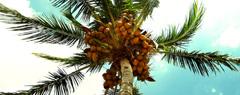 Палмово дърво