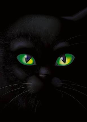 Котка в тъмното