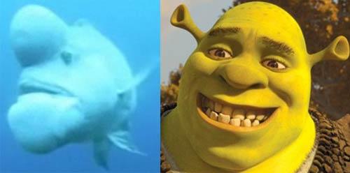 Риба на име Шрек