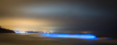 Биолуминисценция
