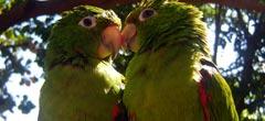 Двойка папагали