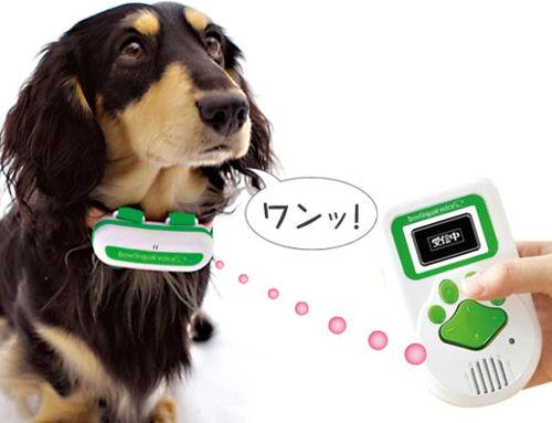 Как кучето ти може да проговори