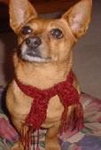 Куче с шал