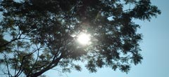 Слънцето